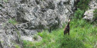 Lista cu animale salbatice din Romania. Mamiferele care populeaza tara noastra