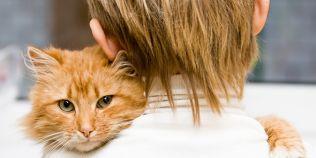 Secretele pisicii: ce trebuie sa stim cand dorim sa adoptam un motan si cum putem avea un animal de companie sanatos