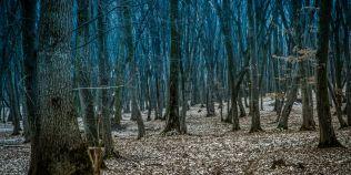 VIDEO Padurea Hoia-Baciu, in topul celor mai stranii locuri din lume, subiect de documentar turistic