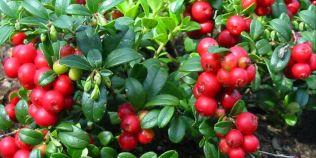 Topul celor mai longevive plante din lume