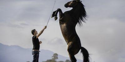 FOTO Romanul cotat printre cei mai buni imblanzitori de cai din lume: